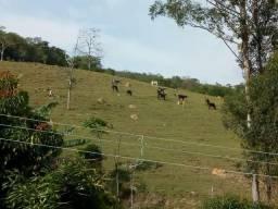 Dezessete alqueires em Cunha