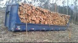 Contrata-se caminhões para serviço de frete de madeira