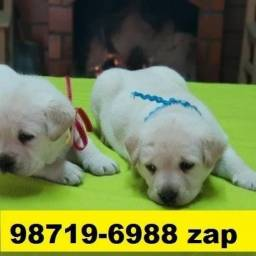 Canil em BH Filhotes Cães Labrador Rottweiler Pastor Golden Akita Boxer Dálmatas