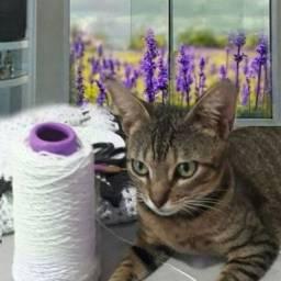 Doação linda gatinha castradinha tigradinha 7meses