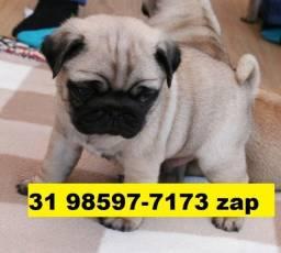 Canil Lindos Filhotes Cães BH Pug Beagle Maltês Shihtzu Bulldog Yorkshire Poodle Basset