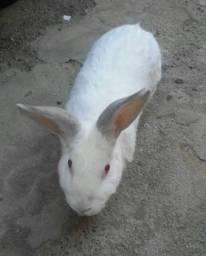 Doação de coelhos