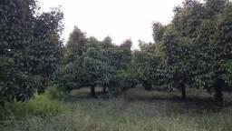 900 mil Sitio com 114 hectares escriturados e com o titulo do iterpa ,com