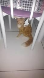 Doação de gato macho ( Camaçari)