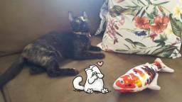 Adoção gatinha Margarida