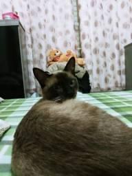 Gato doando
