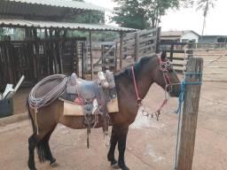 Vendo um cavalo manso