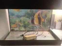 Show de aquário