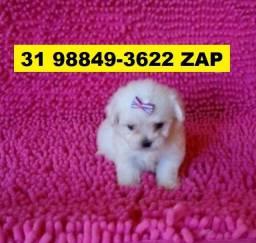 Canil Líder Cães Filhotes BH Poodle Lhasa Maltês Yorkshire Shihtzu Beagle Basset