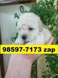 Canil Filhotes Cães Lindos Poodle Beagle Lhasa Maltês Basset Yorkshire Bulldog