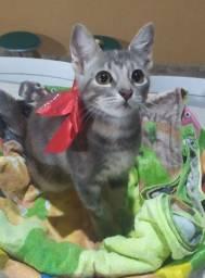 Linda gatinha (adoção)