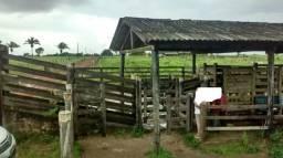 Fazenda em Maracanã com 100 hectares toda no pasto por 600 mil, curral bom ,balança,brete,