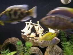 Enfeite aquário