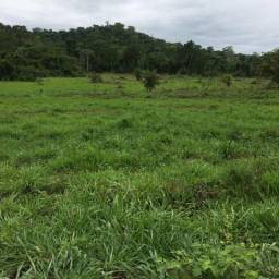Fazenda 700 alqueire alta floresta