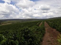239C/Espetacular fazenda de 3.035 ha com café/alambique/eucalipto