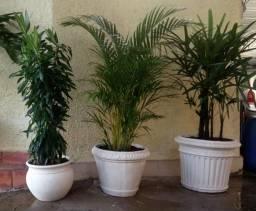 Plantas ornamentais lindassss