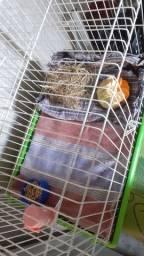 Gaiola para roedores mais porquinho da Índia