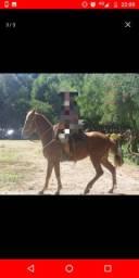 Égua Tostada Mansa