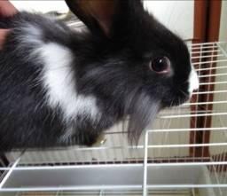 Lindo coelho, pelagem perfeita