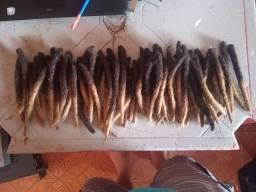 Dreads cabelo humano