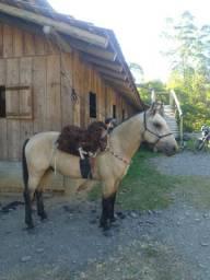 Cavalo Crioulo,vendo ou troco