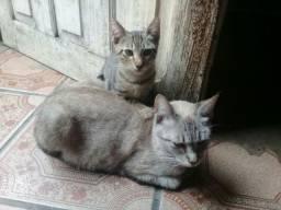 Doação de um gatinho filhote e uma gata adulta