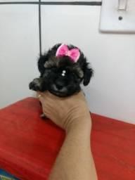 Poodle micro femea 980587117