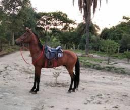 Cavalo tooop