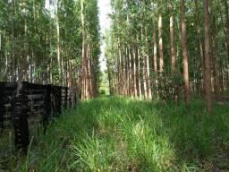 Fazenda 37 alqueires, município de Niquelândia GO, 17km do Quebra-Linhas