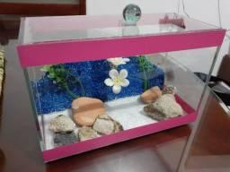 Aquário para peixe betta
