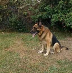 Adestramento canino.