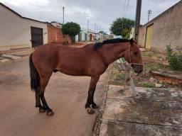 Vende cavalo.