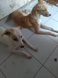 Doa_se cães junto ou separado