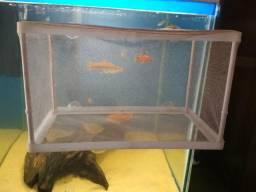 Produtos para aquários