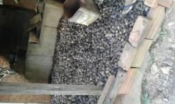 Coco de gueiroba