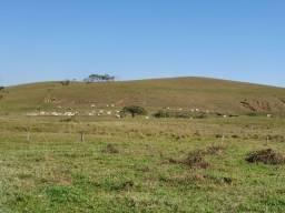 Fazenda Única na Região de Barra Velha