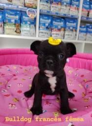 Baby Bulldog Francês