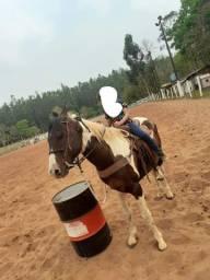 Cavalo pente horce