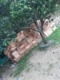 500 tijolos por 100 reais