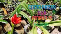 plantas diversas venha na Oxe mudas