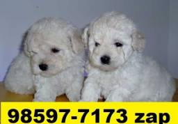 Canil Filhotes Cães Premium BH Poodle Beagle Basset Shihtzu Maltês Yorkshire