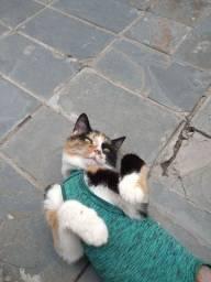 Vende-se roupa pós-cirúrgica para gatas fêmeas