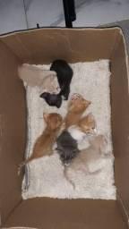 7 gatinhos para adoção RESPONSÁVEL