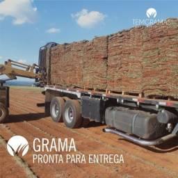 Título do anúncio: Grama Para Sul de Minas