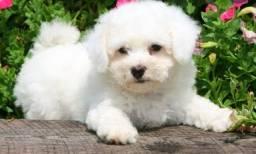 Procuro uma cachorro para adoção se alguém saber ou tiver algum mim chama aqui