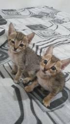 Adoção responsavel de gatos filhotes.