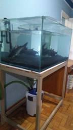 2 aquários