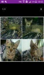 Gatinhos para adoção (macho e fêmea)