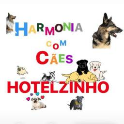 Vai viajar? Que tal hospedar seu doguinho no Harmonia com cães!?