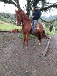 Vendo Cavalo Potranco Mangalarga Machador